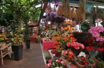 Gartencenter Angebot